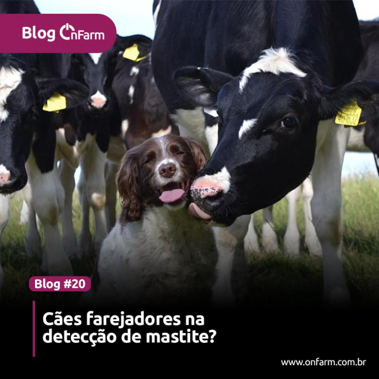 Cães farejadores conseguem identificar agentes causadores de mastite - como o próprio Staph. aureus através do odor.